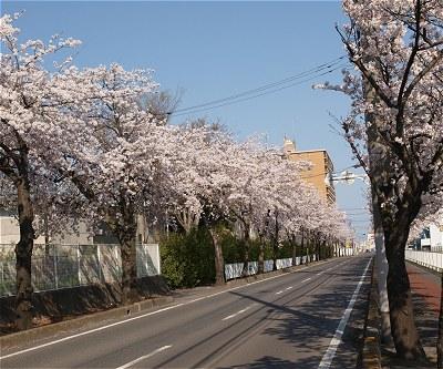 Sakura20140407a