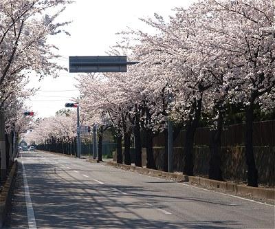 Sakura20140407b