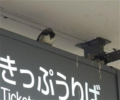 Tsubame20140514