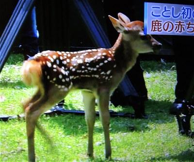 Shika20150510a