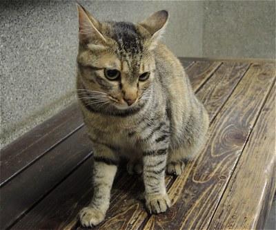 Nishitomineko01