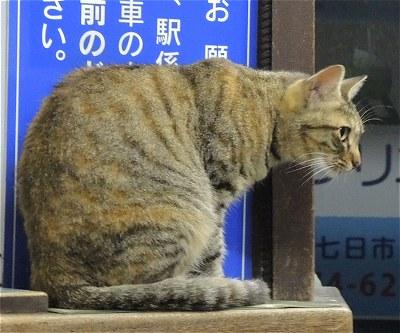 Nishitomineko02