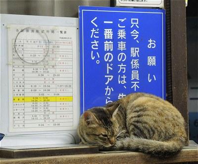 Nishitomineko03