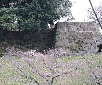 Tayasuzakura01