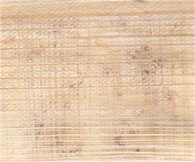 Papyrus02