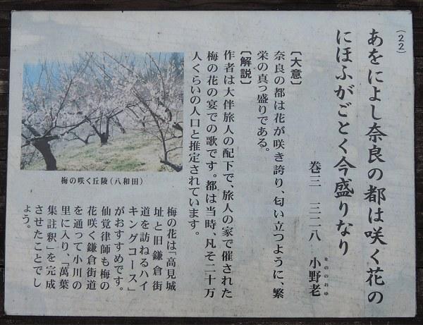 Ogawamanyo07