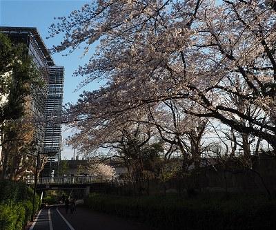Sakura20190403a