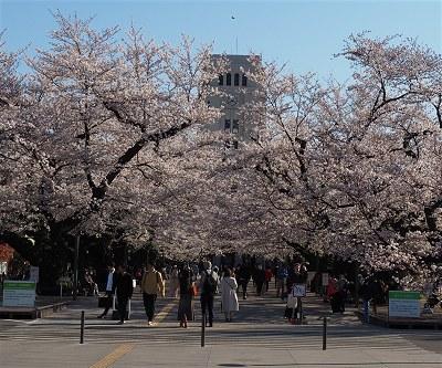 Sakura20190404a