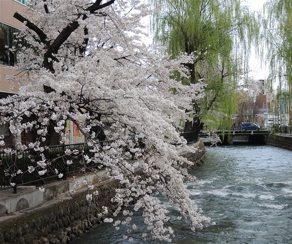 Sakura20190407a