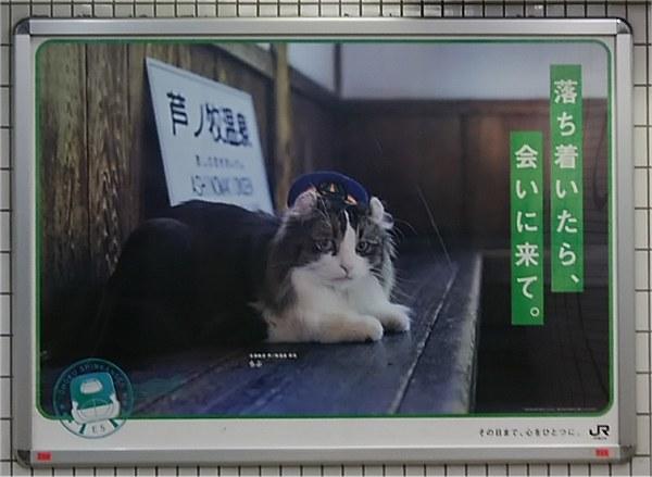 Ashinomakineko