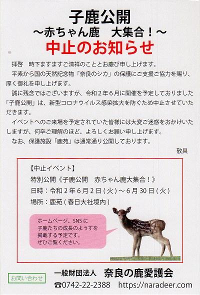 Kojikachushi01