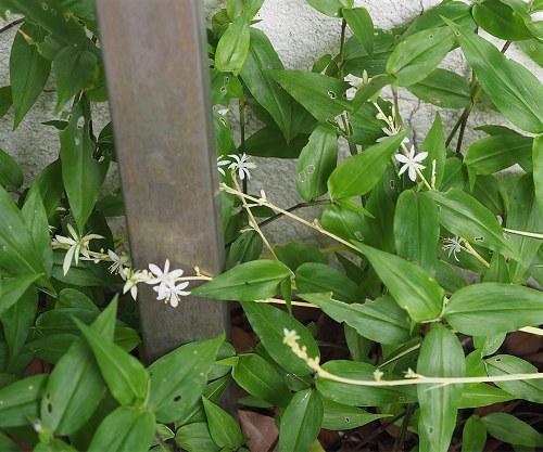 Orizuru202006a