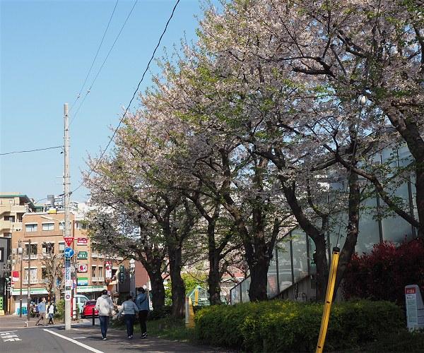 Sakura2020c